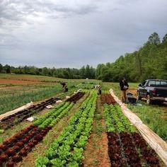 Greenbrier Farms – FoodHub Link